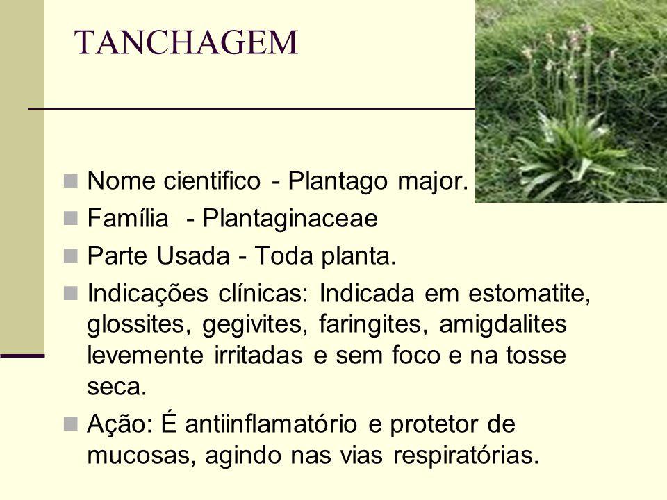 TANCHAGEM Nome cientifico - Plantago major. Família - Plantaginaceae Parte Usada - Toda planta. Indicações clínicas: Indicada em estomatite, glossites