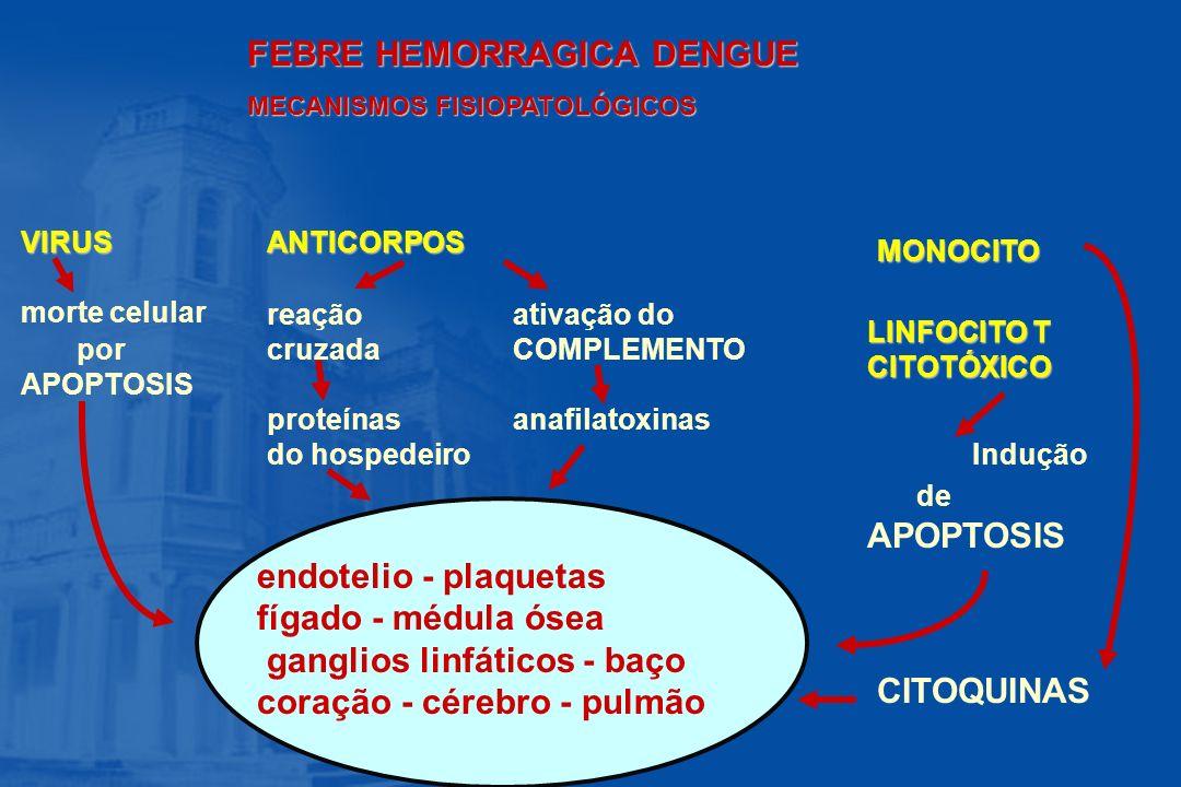 FEBRE HEMORRAGICA DENGUE MECANISMOS FISIOPATOLÓGICOS endotelio - plaquetas fígado - médula ósea ganglios linfáticos - baço coração - cérebro - pulmão