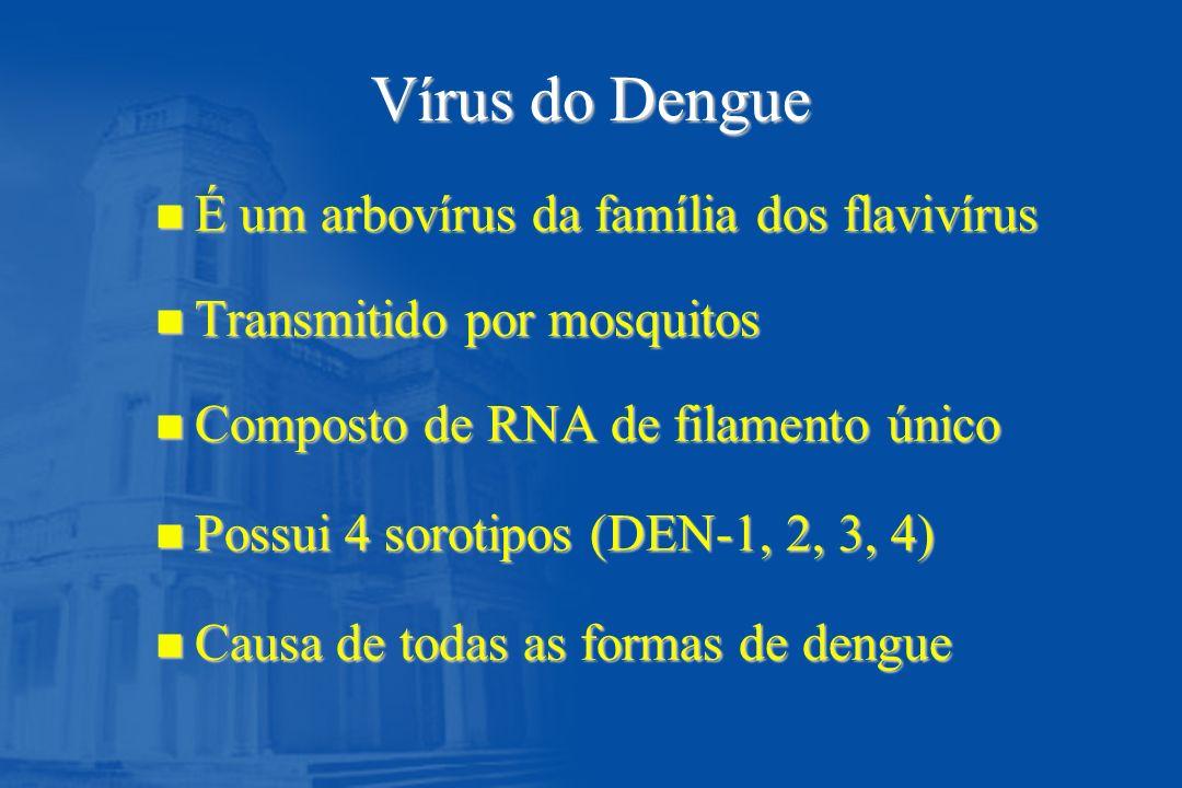 Vírus do Dengue n É um arbovírus da família dos flavivírus n Transmitido por mosquitos n Composto de RNA de filamento único n Possui 4 sorotipos (DEN-