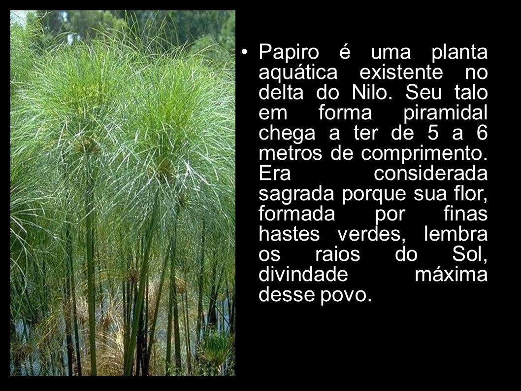 Papiro é uma planta aquática existente no delta do Nilo. Seu talo em forma piramidal chega a ter de 5 a 6 metros de comprimento. Era considerada sagra