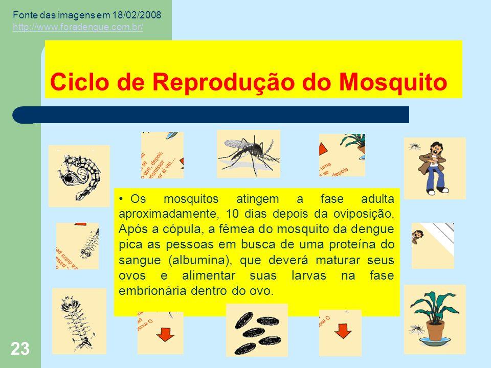 23 Ciclo de Reprodução do Mosquito Os mosquitos atingem a fase adulta aproximadamente, 10 dias depois da oviposição.