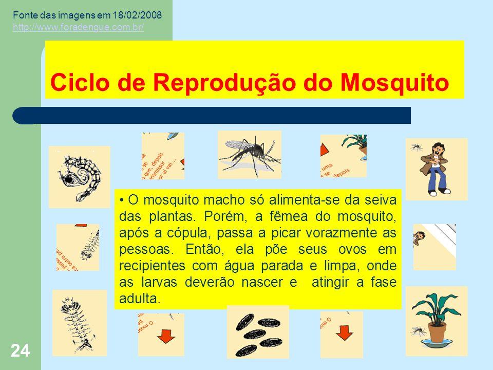 24 Ciclo de Reprodução do Mosquito O mosquito macho só alimenta-se da seiva das plantas.