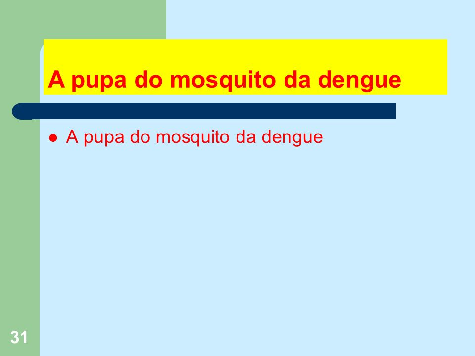 31 A pupa do mosquito da dengue