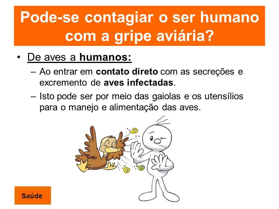 Pode-se contagiar o ser humano com a gripe aviária? De aves a humanos: –Ao entrar em contato direto com as secreções e excremento de aves infectadas.