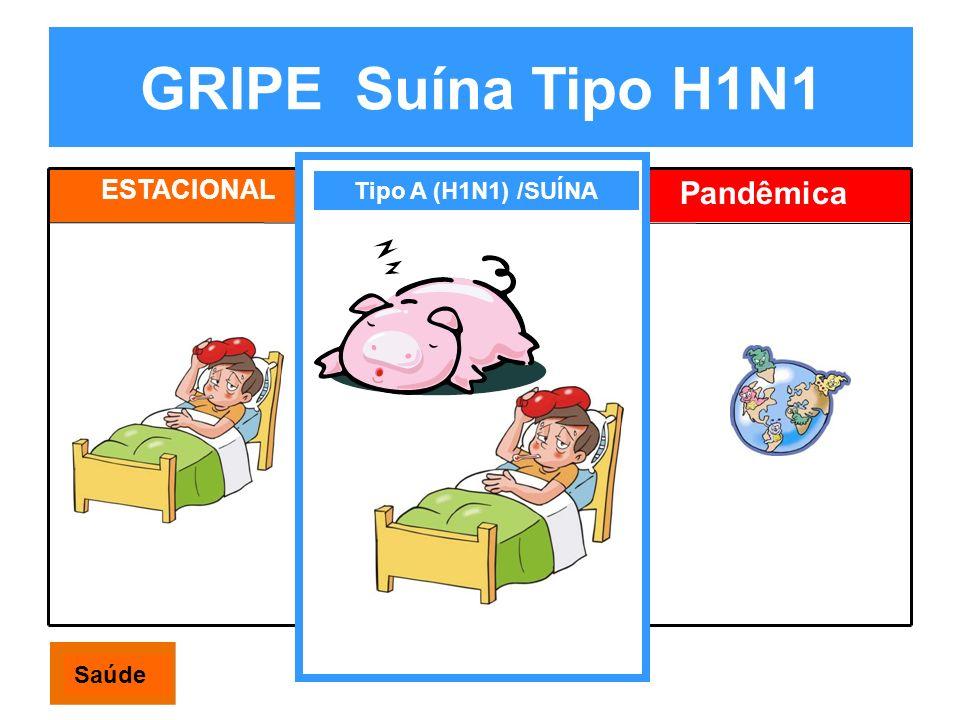 GRIPE Suína Tipo H1N1 ESTACIONAL Estacional Pandêmica Tipo A (H1N1) /SUÍNA Saúde