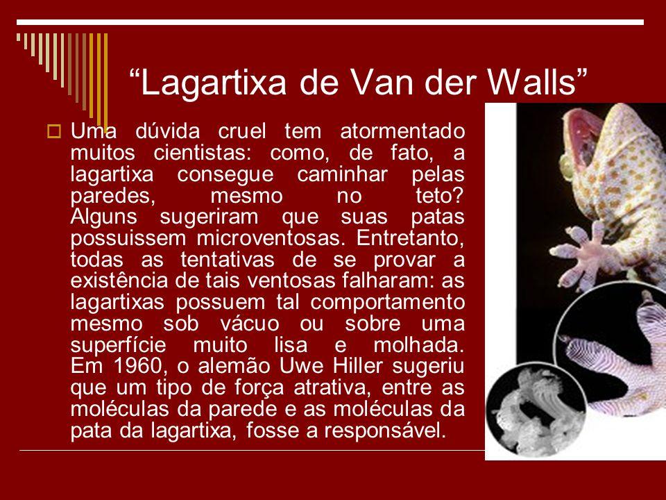Lagartixa de Van der Walls Uma dúvida cruel tem atormentado muitos cientistas: como, de fato, a lagartixa consegue caminhar pelas paredes, mesmo no teto.