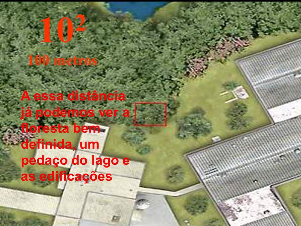 Começamos nossa viagem para cima nos afastando da origem... já podemos ver os arbustos da floresta. 10 1 10 metros