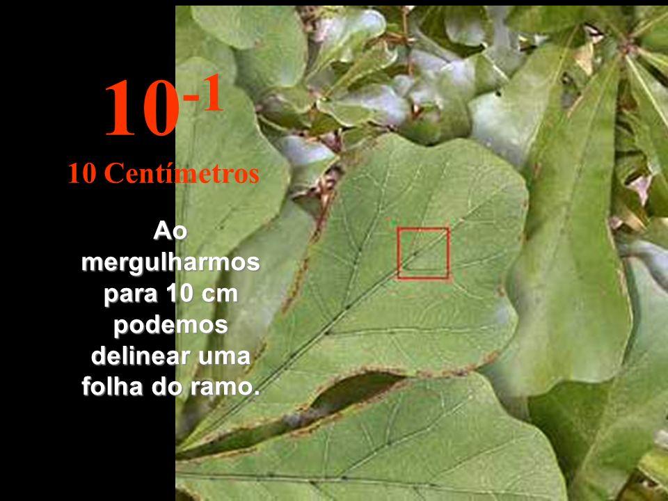 Ao mergulharmos para 10 cm podemos delinear uma folha do ramo. 10 -1 10 Centímetros