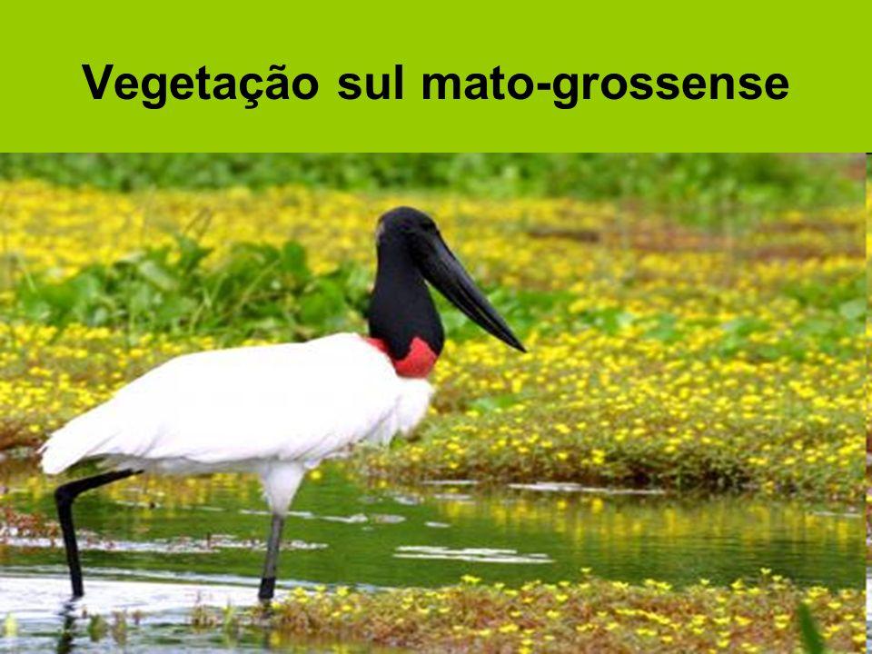 Região geoeconômica Centro-Sul do Brasil