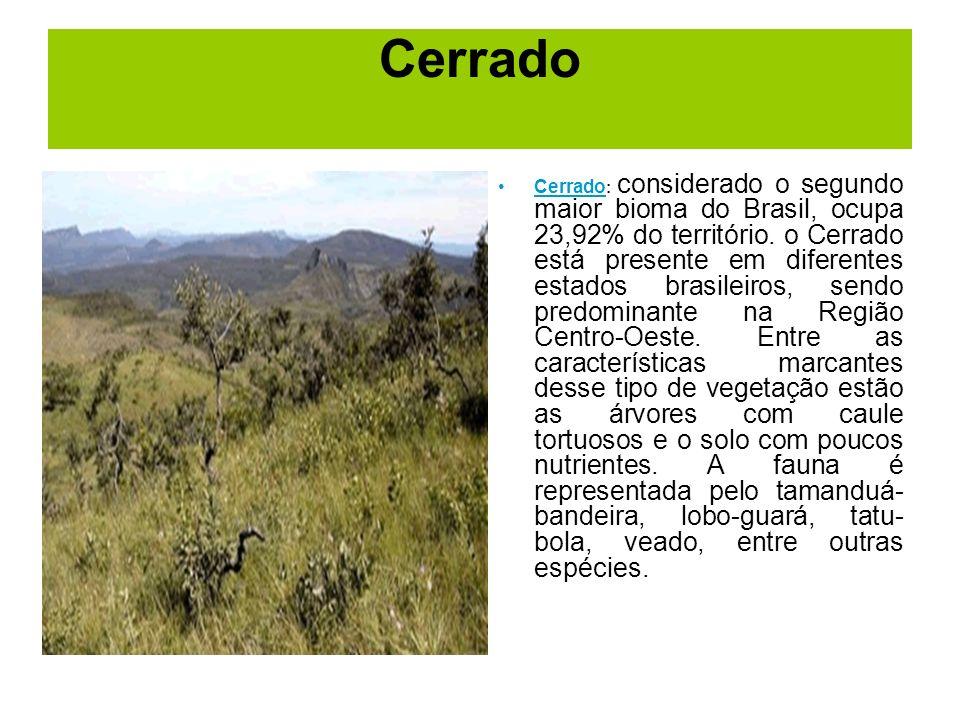 Cerrado Cerrado : considerado o segundo maior bioma do Brasil, ocupa 23,92% do território. o Cerrado está presente em diferentes estados brasileiros,