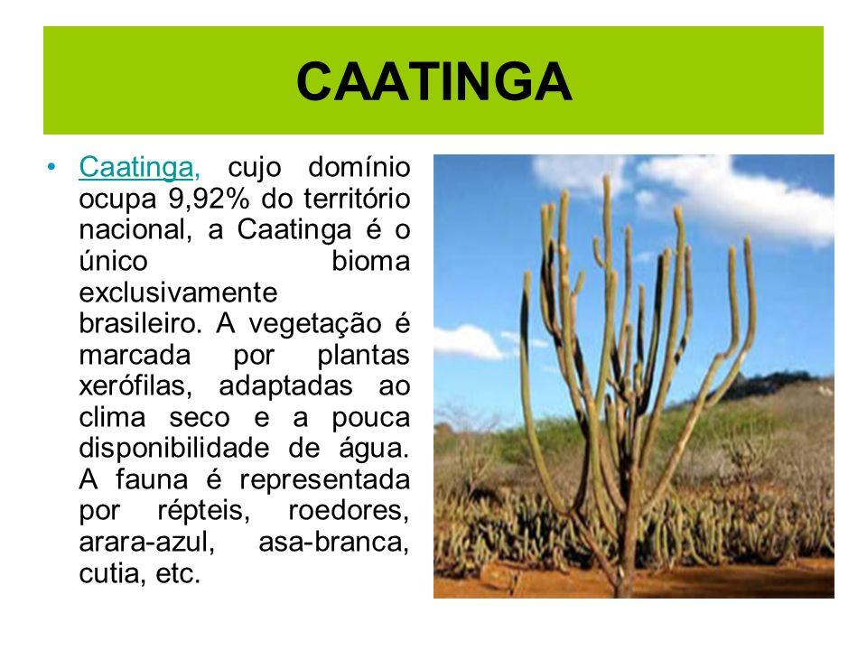 CAATINGA Caatinga, cujo domínio ocupa 9,92% do território nacional, a Caatinga é o único bioma exclusivamente brasileiro. A vegetação é marcada por pl