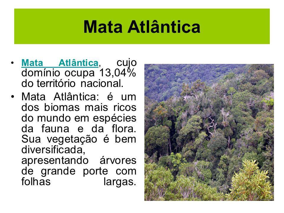 Mata Atlântica Mata Atlântica, cujo domínio ocupa 13,04% do território nacional.Mata Atlântica Mata Atlântica: é um dos biomas mais ricos do mundo em