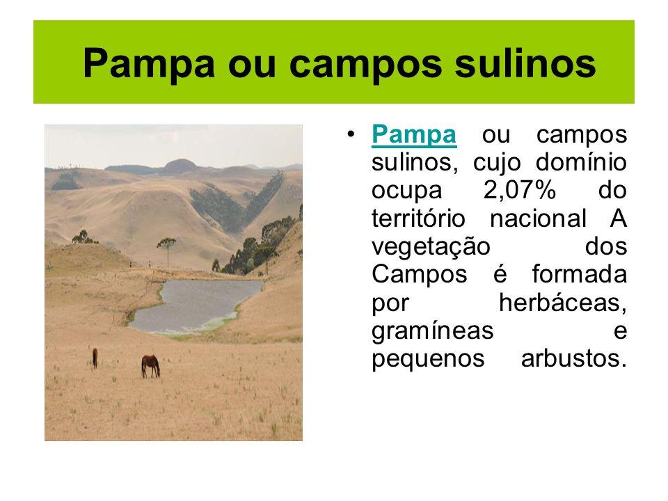 Pampa ou campos sulinos Pampa ou campos sulinos, cujo domínio ocupa 2,07% do território nacional A vegetação dos Campos é formada por herbáceas, gramí