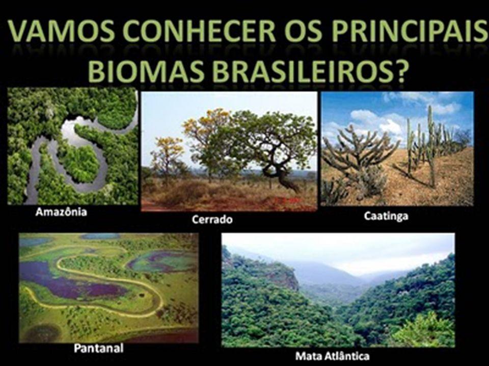 Site http://eptv.globo.com/terradagente/Bioma.aspx
