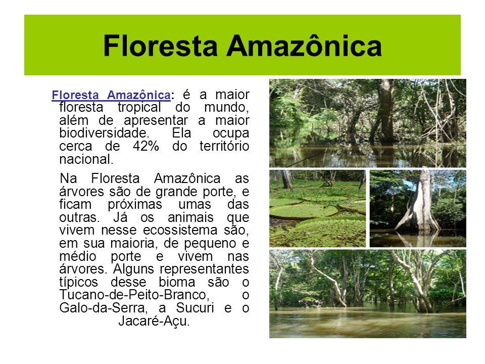 Floresta Amazônica Floresta Amazônica: é a maior floresta tropical do mundo, além de apresentar a maior biodiversidade. Ela ocupa cerca de 42% do terr