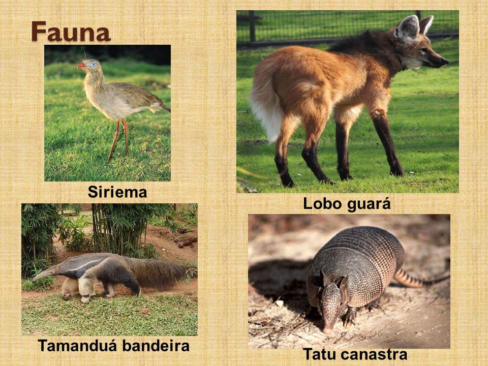 Fauna Siriema Tamanduá bandeira Lobo guará Tatu canastra