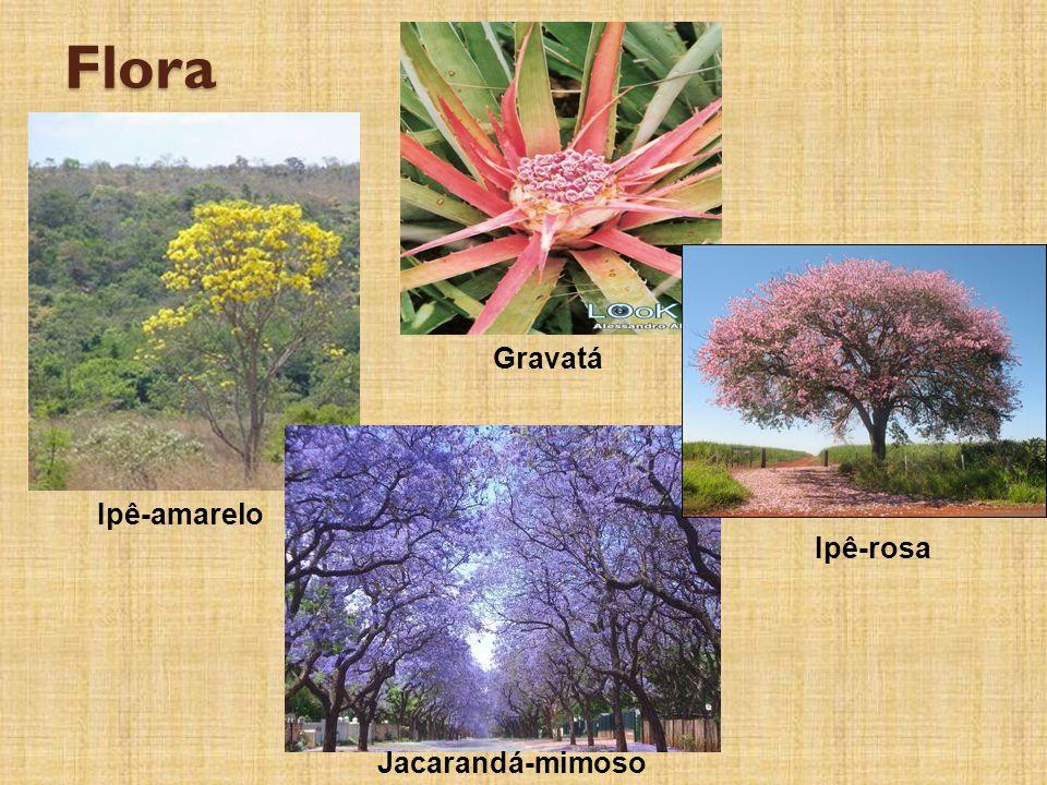 Flora Ipê-amarelo Gravatá Ipê-rosa Jacarandá-mimoso