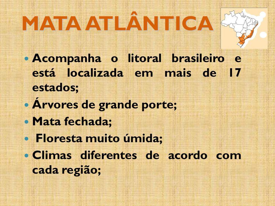 MATA ATLÂNTICA Acompanha o litoral brasileiro e está localizada em mais de 17 estados; Árvores de grande porte; Mata fechada; Floresta muito úmida; Climas diferentes de acordo com cada região;