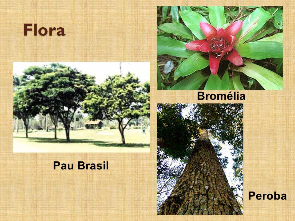 Flora Pau Brasil Bromélia Peroba