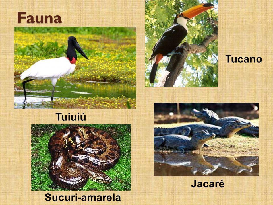 Fauna Tuiuiú Tucano Sucuri-amarela Jacaré