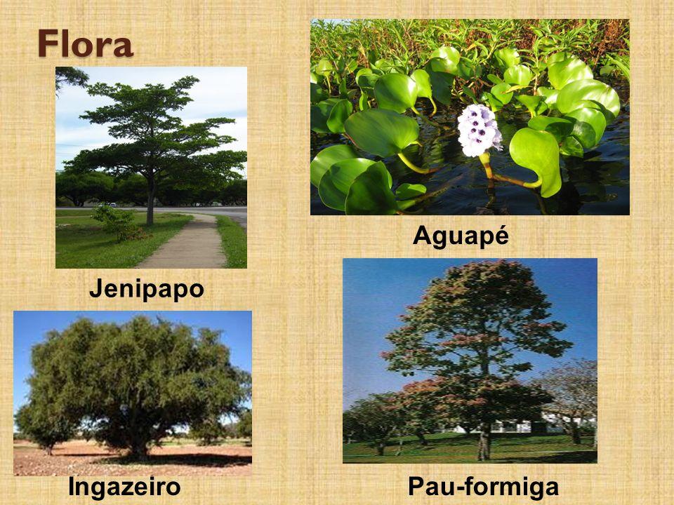 Flora Aguapé Jenipapo IngazeiroPau-formiga