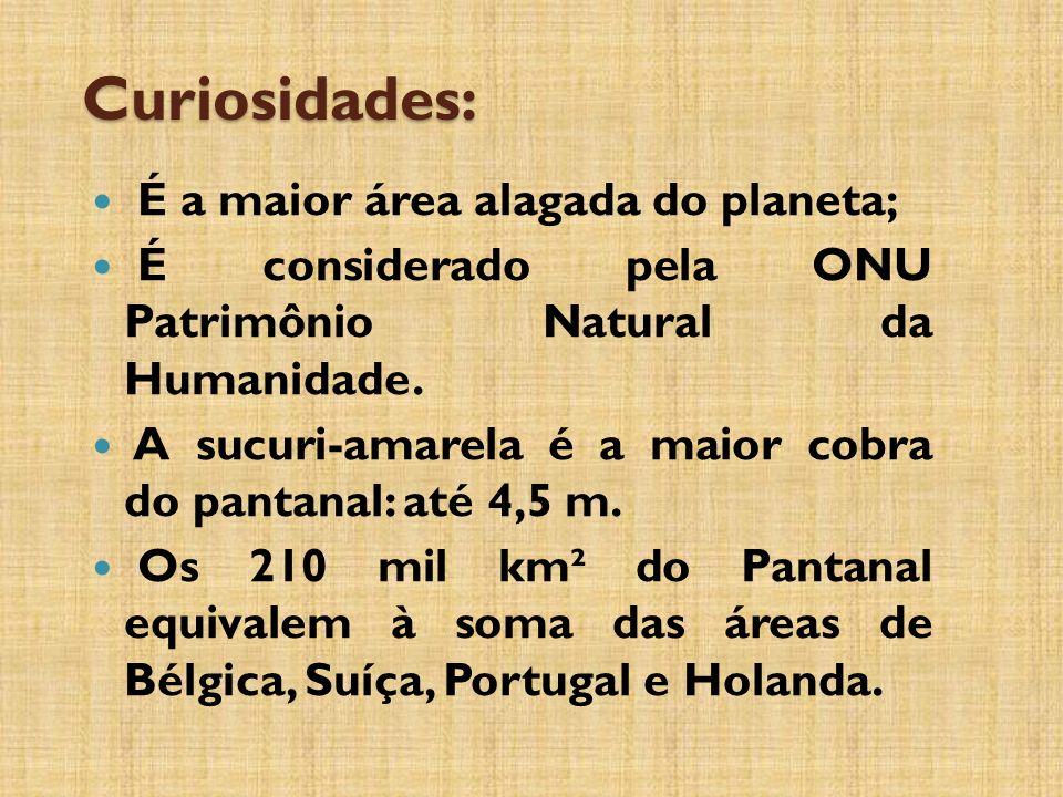 Curiosidades: É a maior área alagada do planeta; É considerado pela ONU Patrimônio Natural da Humanidade.