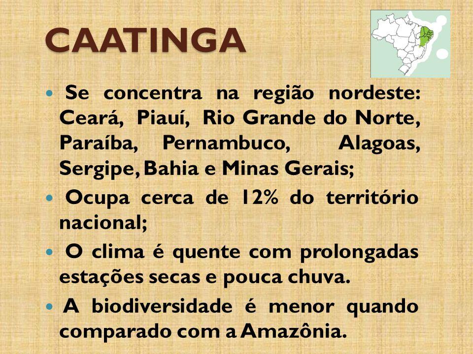 CAATINGA Se concentra na região nordeste: Ceará, Piauí, Rio Grande do Norte, Paraíba, Pernambuco, Alagoas, Sergipe, Bahia e Minas Gerais; Ocupa cerca de 12% do território nacional; O clima é quente com prolongadas estações secas e pouca chuva.