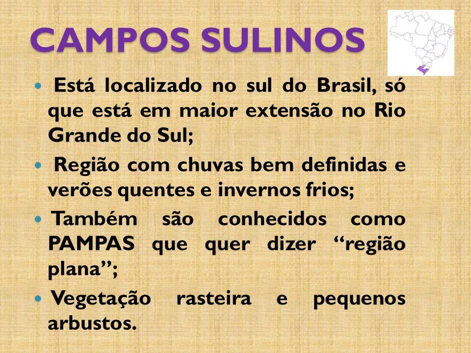 CAMPOS SULINOS Está localizado no sul do Brasil, só que está em maior extensão no Rio Grande do Sul; Região com chuvas bem definidas e verões quentes e invernos frios; Também são conhecidos como PAMPAS que quer dizer região plana; Vegetação rasteira e pequenos arbustos.