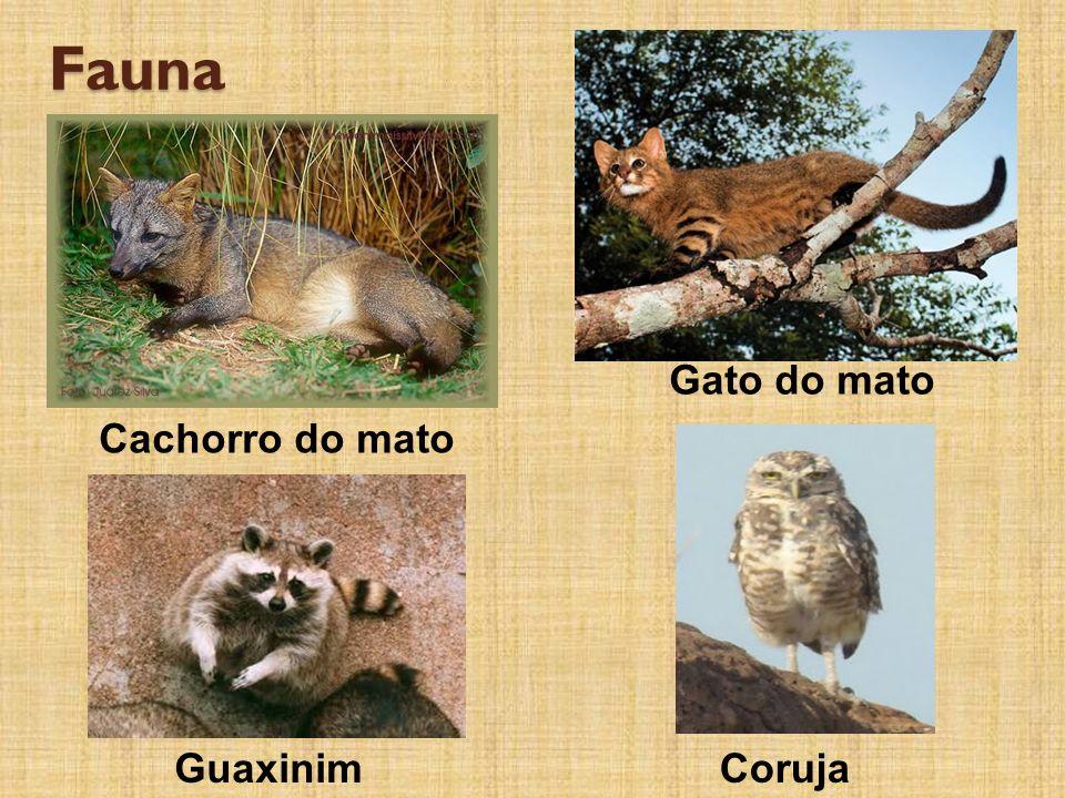 Fauna Cachorro do mato Gato do mato GuaxinimCoruja