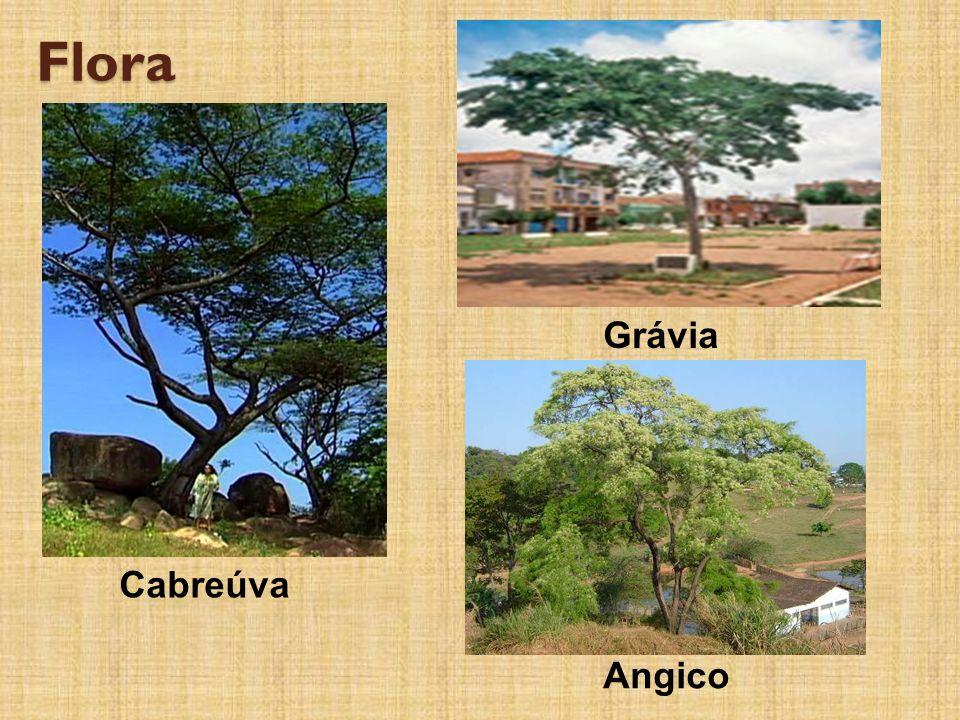 Flora Cabreúva Grávia Angico