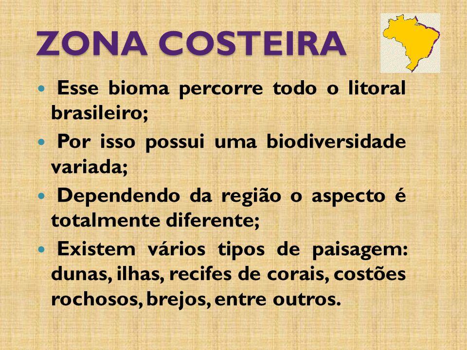 ZONA COSTEIRA Esse bioma percorre todo o litoral brasileiro; Por isso possui uma biodiversidade variada; Dependendo da região o aspecto é totalmente diferente; Existem vários tipos de paisagem: dunas, ilhas, recifes de corais, costões rochosos, brejos, entre outros.