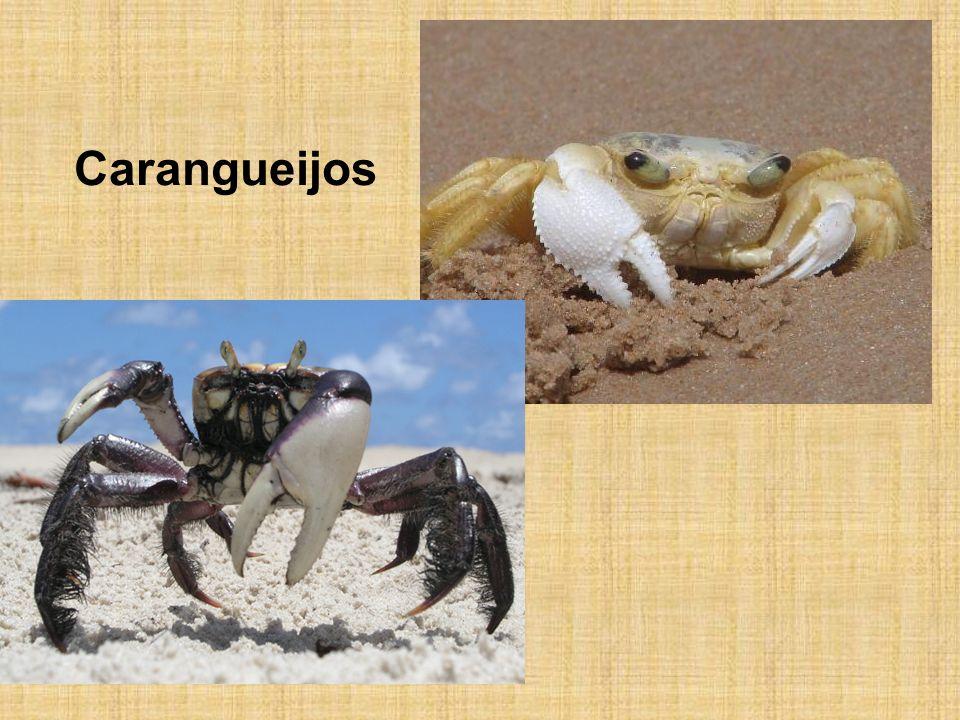 Carangueijos