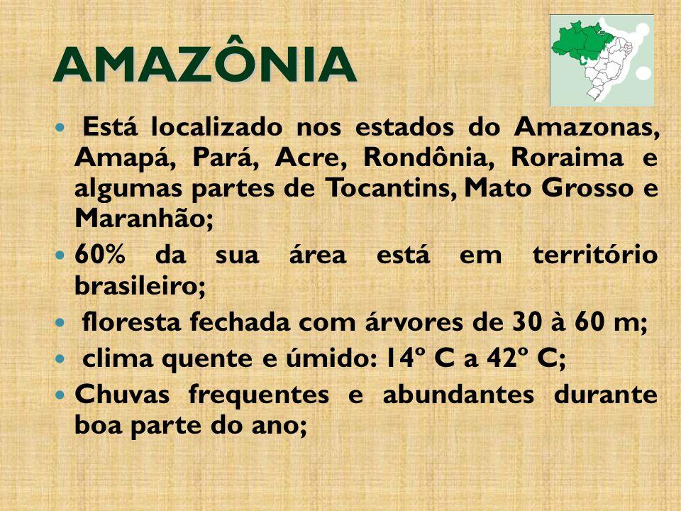 AMAZÔNIA Está localizado nos estados do Amazonas, Amapá, Pará, Acre, Rondônia, Roraima e algumas partes de Tocantins, Mato Grosso e Maranhão; 60% da sua área está em território brasileiro; floresta fechada com árvores de 30 à 60 m; clima quente e úmido: 14º C a 42º C; Chuvas frequentes e abundantes durante boa parte do ano;