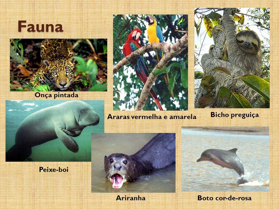 Fauna Onça pintada Peixe-boi Ariranha Bicho preguiça Araras vermelha e amarela Boto cor-de-rosa