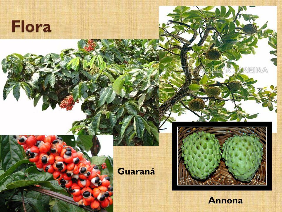 Flora Annona Guaraná
