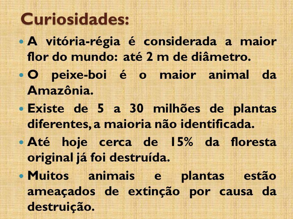 Curiosidades: A vitória-régia é considerada a maior flor do mundo: até 2 m de diâmetro.