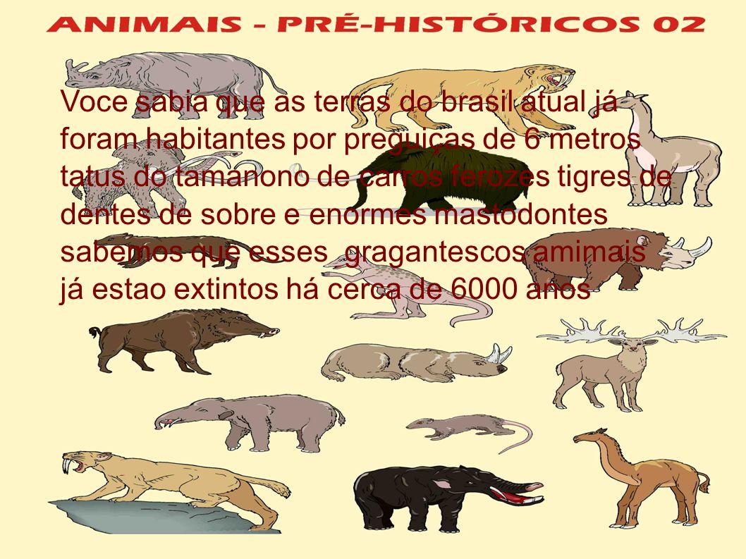 Voce sabia que as terras do brasil atual já foram habitantes por preguiças de 6 metros tatus do tamanono de carros ferozes tigres de dentes de sobre e