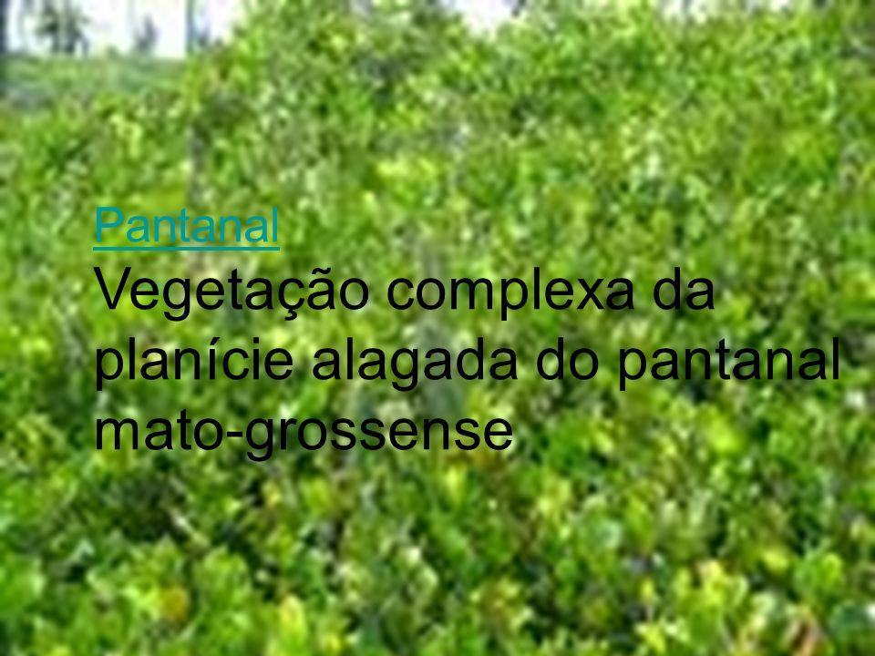 Pantanal Pantanal Vegetação complexa da planície alagada do pantanal mato-grossense