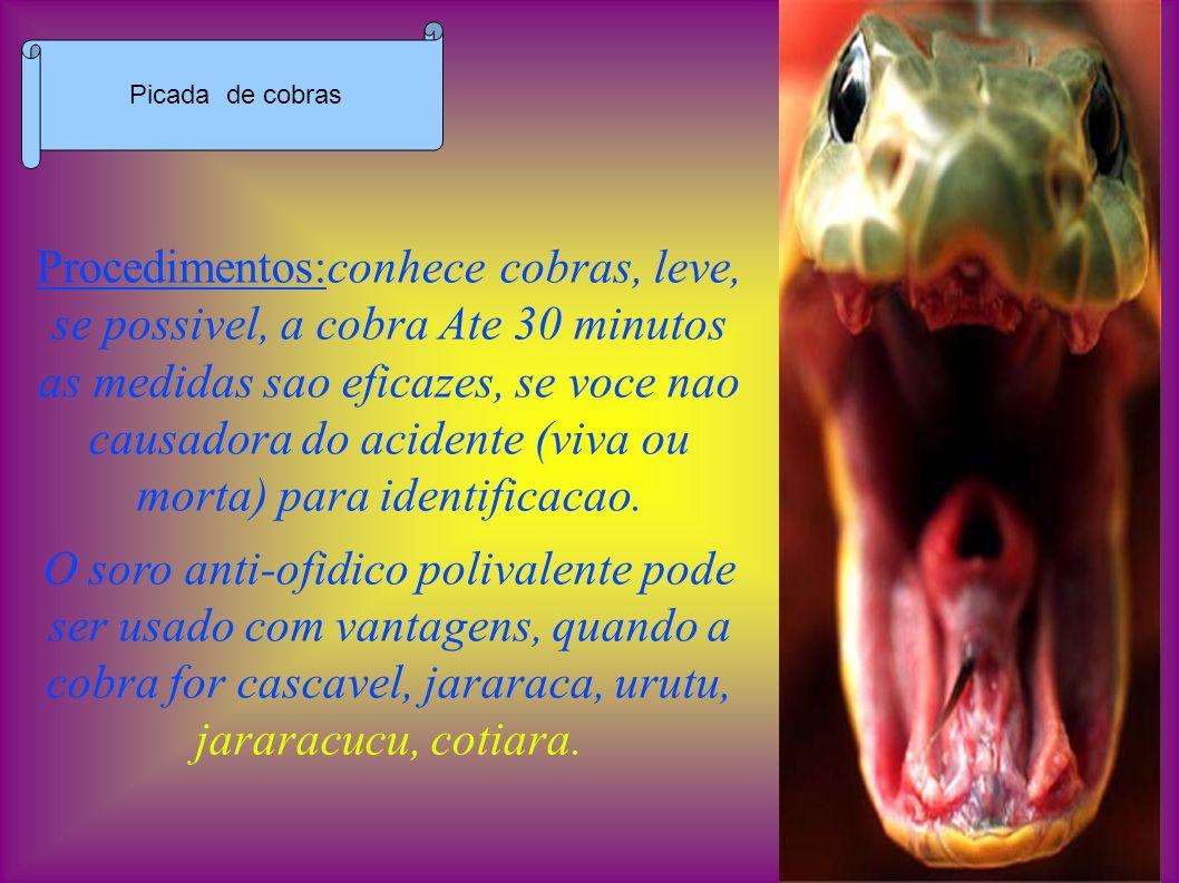 Diferencas entre venenosos e nao venenosos: VENENOSOS - Fosseta lacrimal, cabeca triangular, olhos pequenos, cauda afinando abruptamente, escamas com desenhos irregulares, 02 presas no maxilar superior.