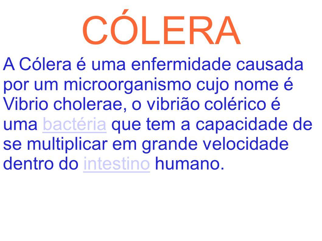 CÓLERA A Cólera é uma enfermidade causada por um microorganismo cujo nome é Vibrio cholerae, o vibrião colérico é uma bactéria que tem a capacidade de