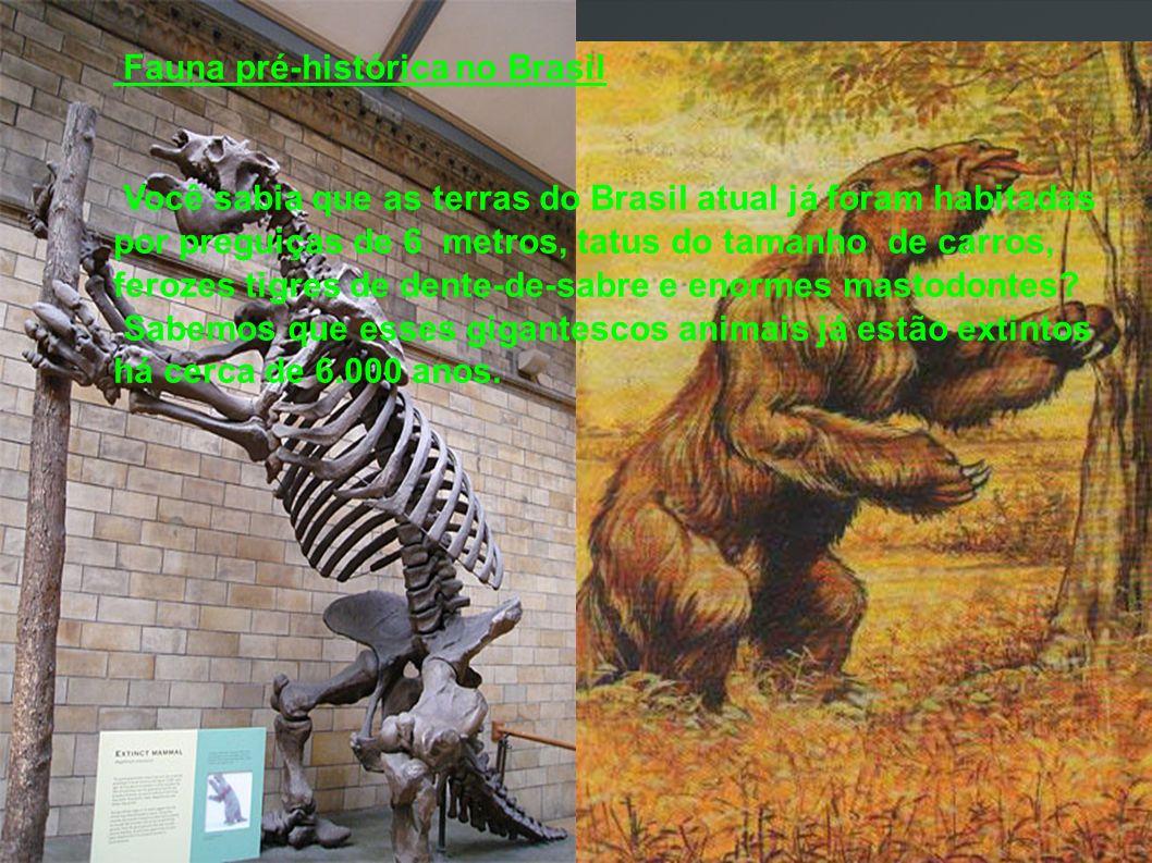 Fauna pré-histórica no Brasil Você sabia que as terras do Brasil atual já foram habitadas por preguiças de 6 metros, tatus do tamanho de carros, feroz