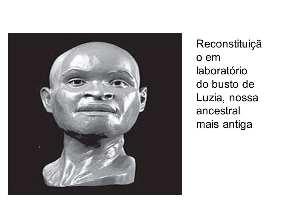 Reconstituiçã o em laboratório do busto de Luzia, nossa ancestral mais antiga