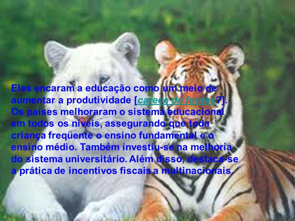 ECONOMIA DOS TRIGRES Os Tigres asiáticos alcançaram o desenvolvimento com um modelo econômico exportador; esses territórios e nações produzem todo tip