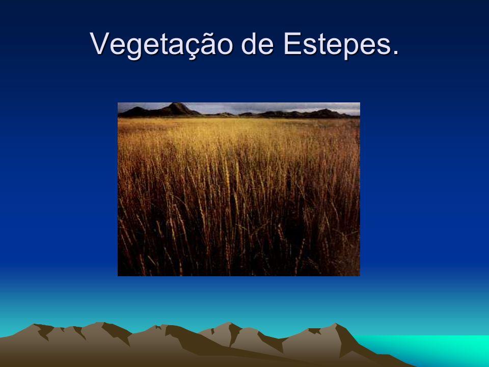 Estepe é uma vegetação rasteira, ela ocorre em volta dos desertos onde as chuvas são escassas e mal distribuída. As estepes semi-áridas são encontrada
