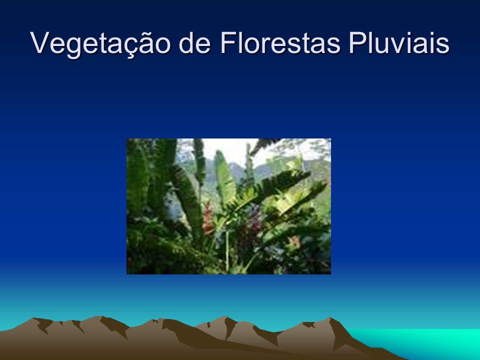 Vegetação de Florestas Pluviais. Essas florestas ocorrem em regiões de clima quente. Além de uma quantidade suficiente de calor, elas necessitam de ch