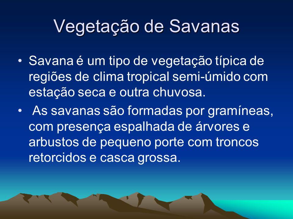 Vegetação de Florestas Pluviais