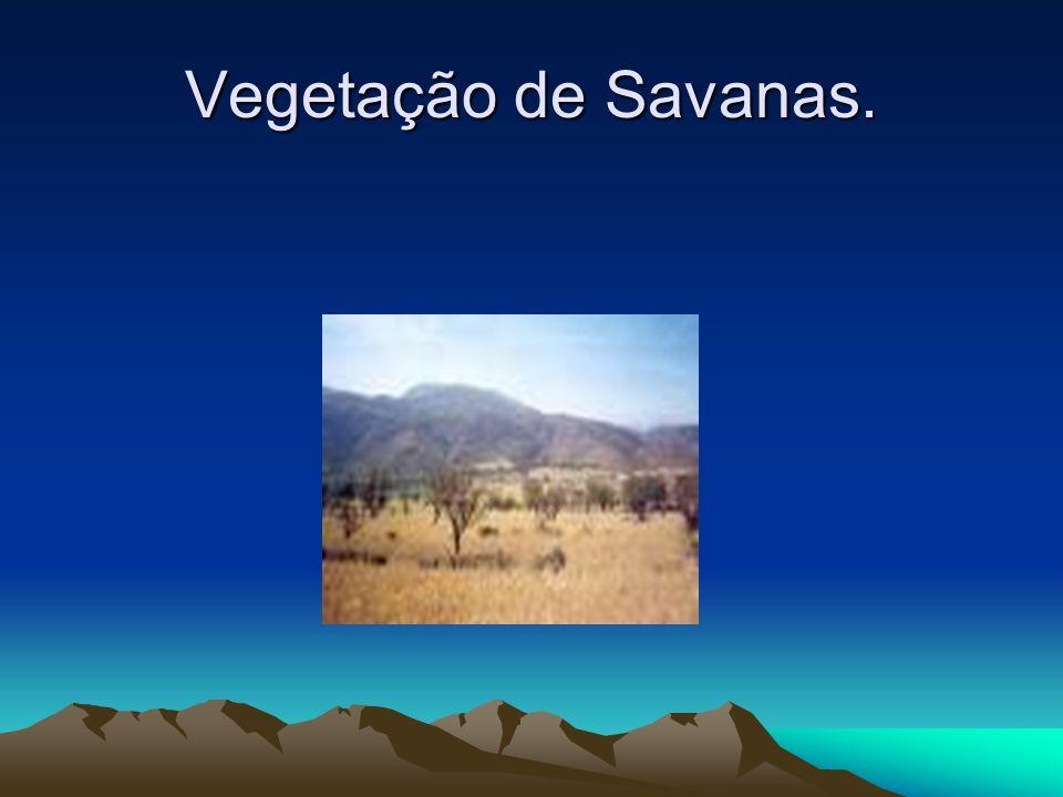 Vegetação de Savanas Savana é um tipo de vegetação típica de regiões de clima tropical semi-úmido com estação seca e outra chuvosa. As savanas são for