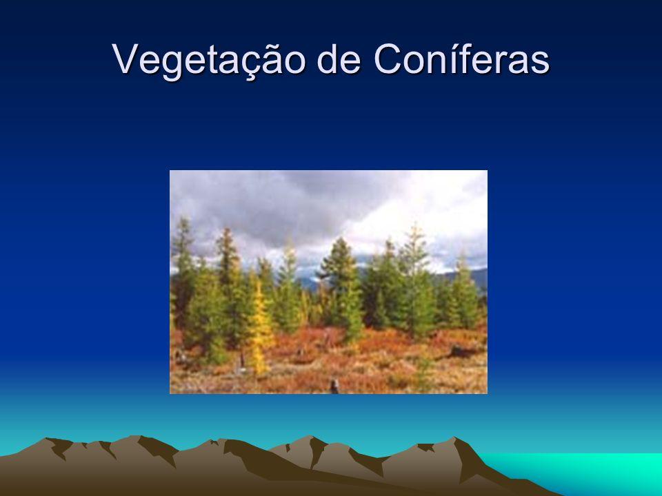 Vegetação de Conífera Taiga também ou Floresta Boreal, é um tipo de vegetação caracterizada pela presença de coníferas, (pinheiros e abetos).