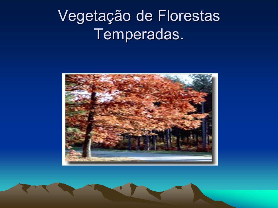 Vegetação de Florestas Temperadas Floresta temperada é um bioma encontrado nas regiões situadas entre os pólos e os trópicos, característica das zonas