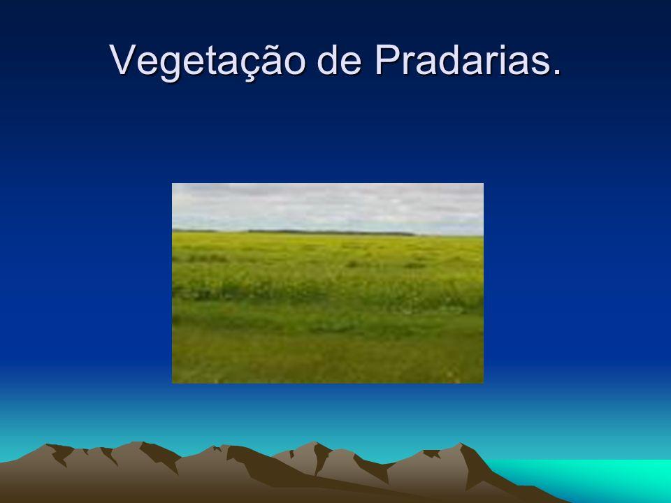 Vegetação de Pradarias É formada por gramíneas que cobrem uniforme o solo, podendo ocorrer alguns arbustos, situa –se em áreas de clima temperado. O e